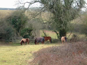 Herd of horses grazing in the field